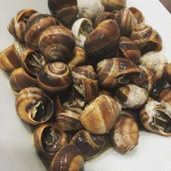 Moustakallis Tavern Traditional Cooked Escargot