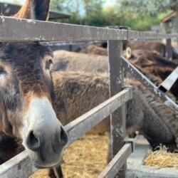 Donkeys Farm