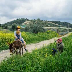 Golden Donkeys Rides