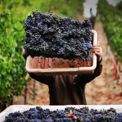 Wine Tours Around Cypriot Wineries