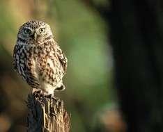 Cyprus Event: BirdLife Field Meetings 2017