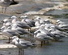 Cyprus Event: BirdLife Field Meetings - January 2018