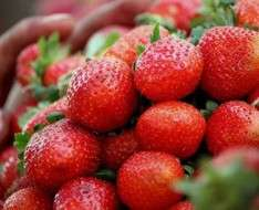 Cyprus Event: 11th Deryneia Strawberry Festival 2018