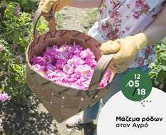 Cyprus Event: Rose picking in Agros