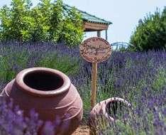 Cyprus Event: Lavender Festival 2018