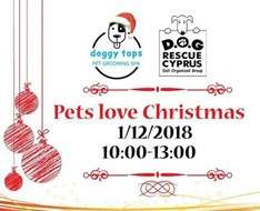 Cyprus Event: Pets Love Christmas