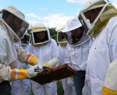 Become A Beekeeper for A Day (Oct-24-2021 )
