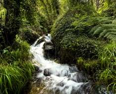 Troodos - Pafos Forest: Within Forest and Rivers - Workshop